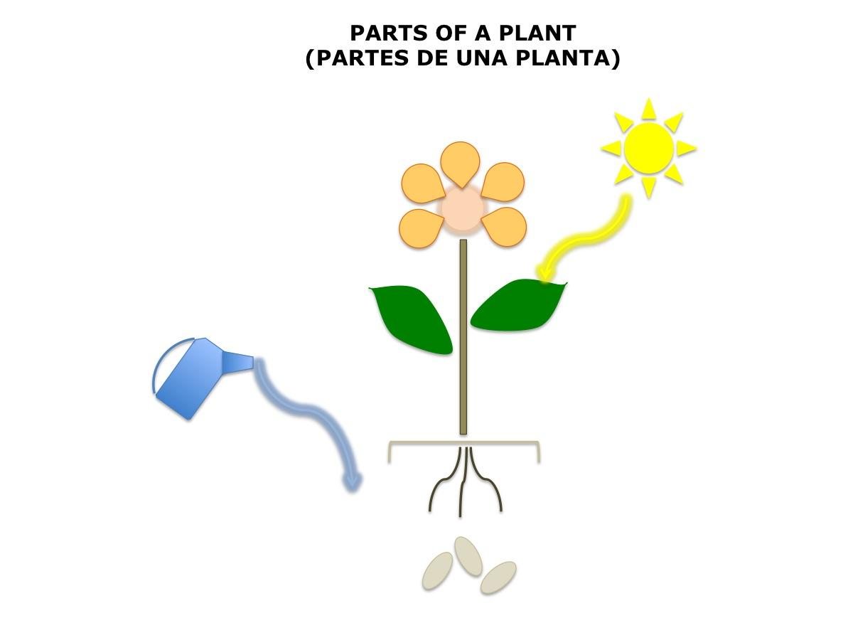 Plant Diagram2